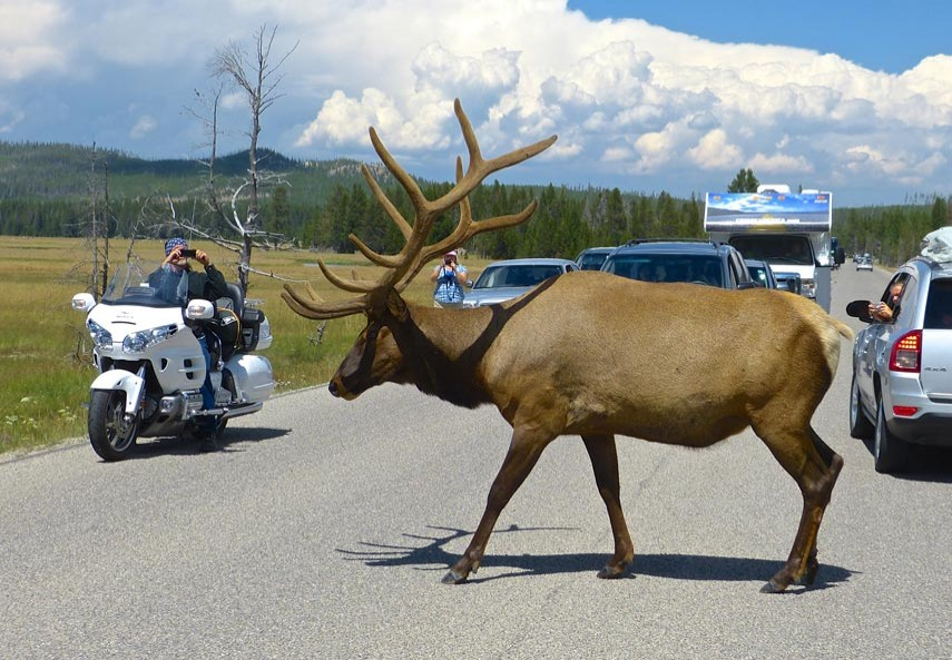 Rencontre au Yellowstone